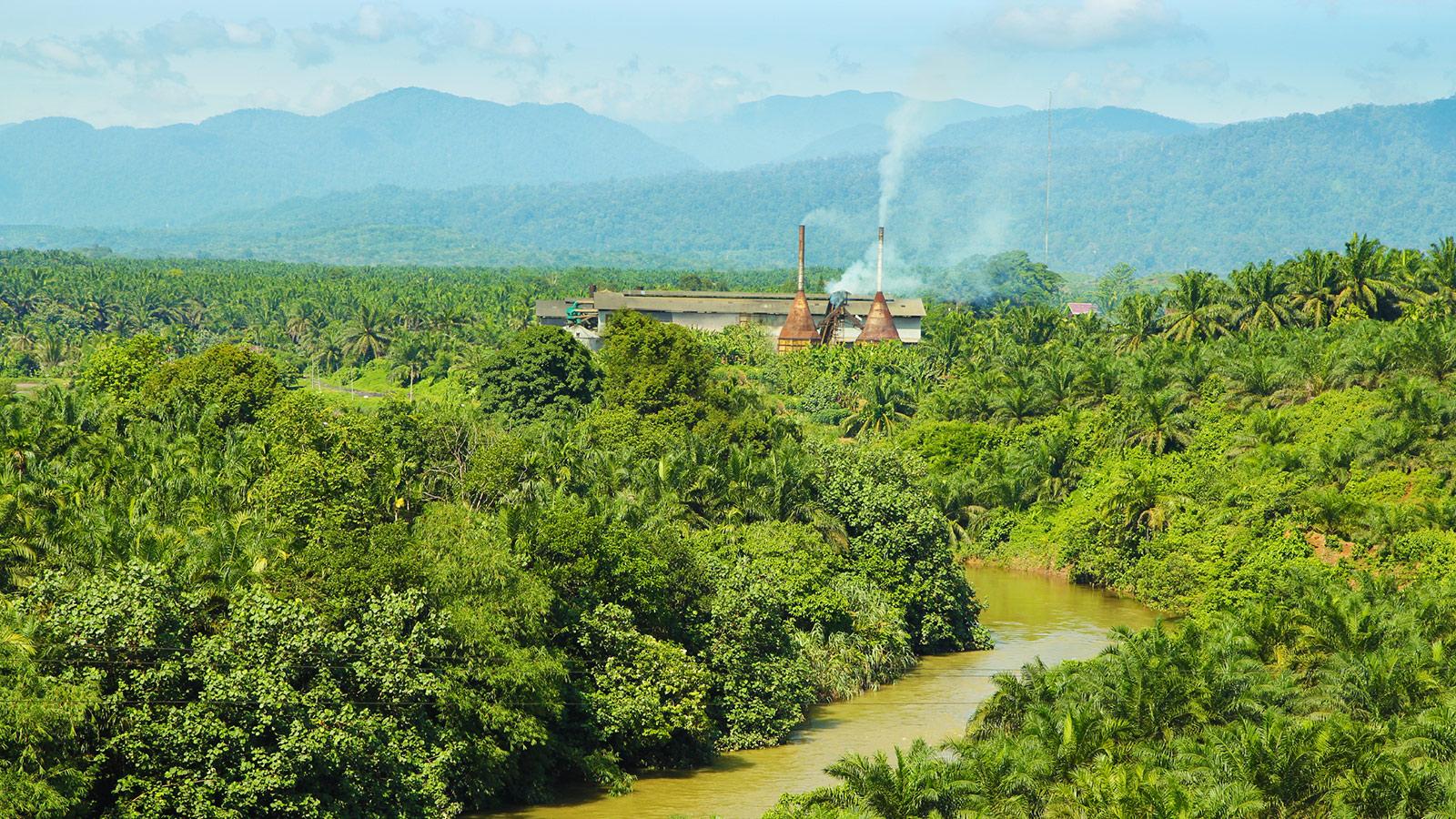 Palm oil factory