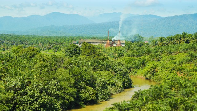 Palm oil factory