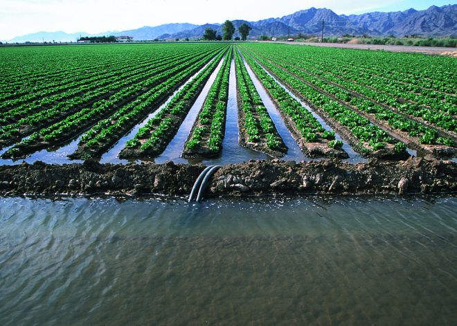 flood irrigation in Arizona