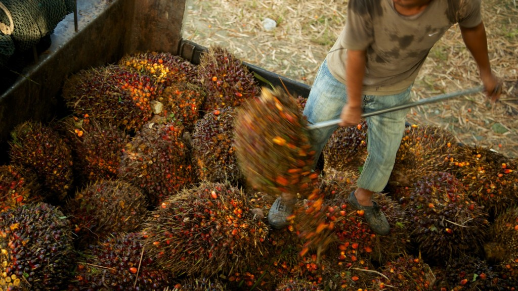 A worker loading oil palm fruit off a truck in Sabah, Malaysia.