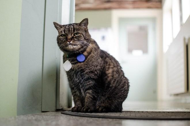 Toppstöðin's resident cat.