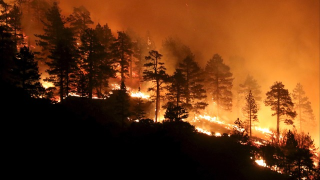 Los Angeles county firefighters battle wild land fire call the Pine Fire in Wrightwood, California July 17, 2015.