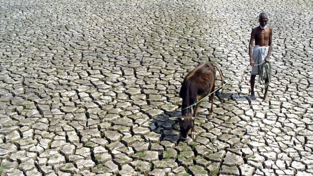 An Indian farmer walks with his hungry cow through a parched paddy field in Agartala, India, 2005.