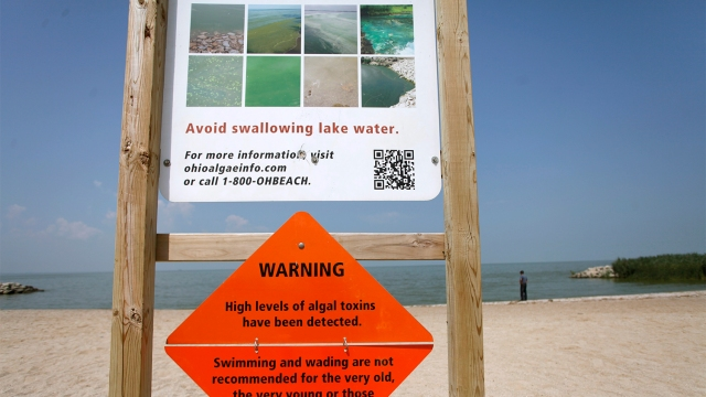 Signs displaying warnings about algae surfacing on the shore line are pictured at Maumee Bay State Park public beach along Lake Erie in Oregon