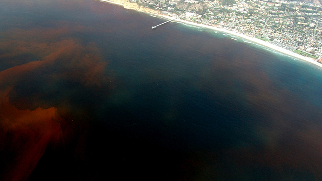 Red tide in La Jolla, California