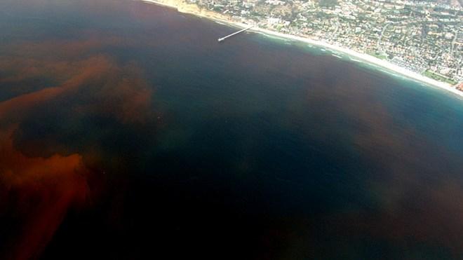Red tide in La Jolla, California