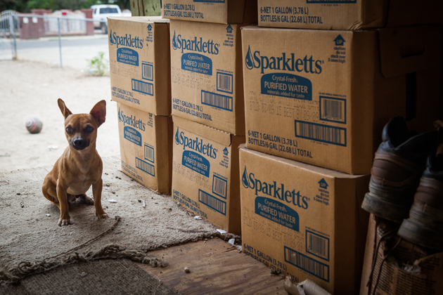 Some pets are fed potable water delivered by the county, while others are left with dirtier water or are abandoned.