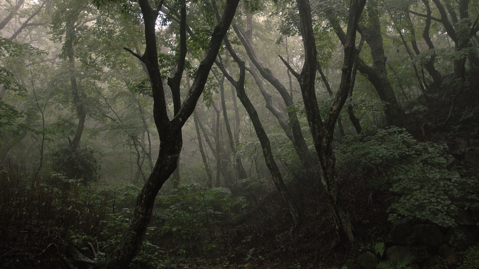 Forest in Korea