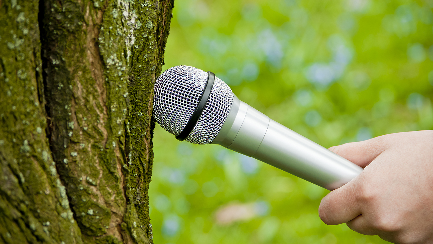 Interviewing a tree
