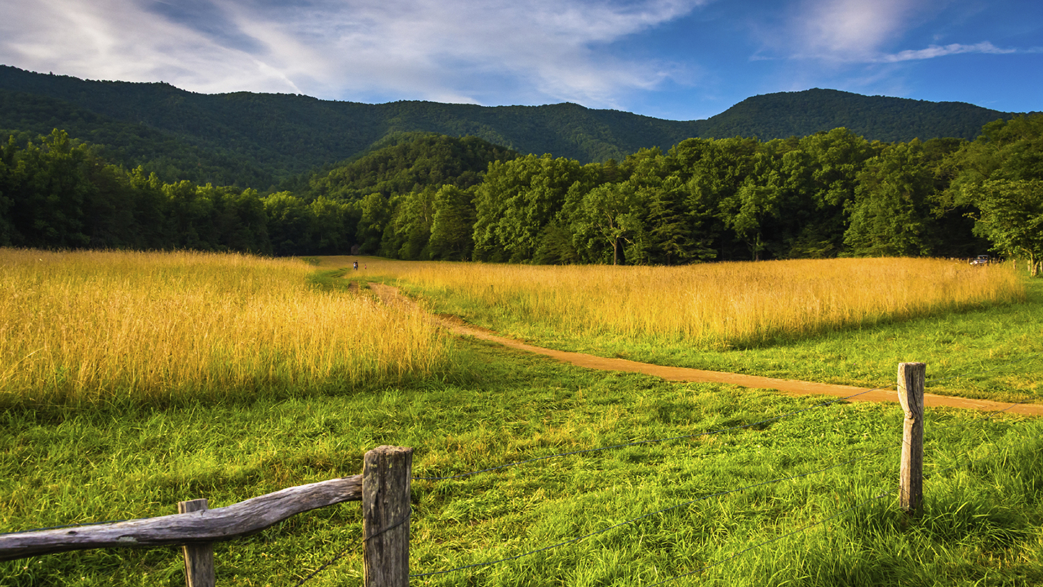 Fence, field, and forest