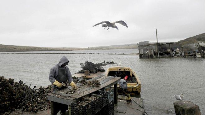 oysterworker