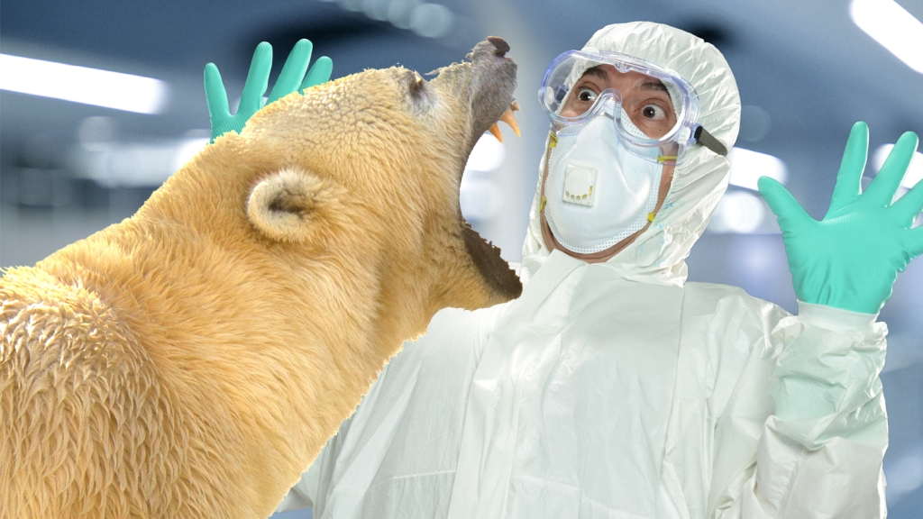 Polar bear about to eat a scientist