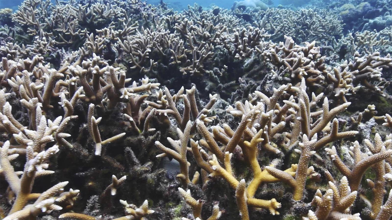 Coral Engineering