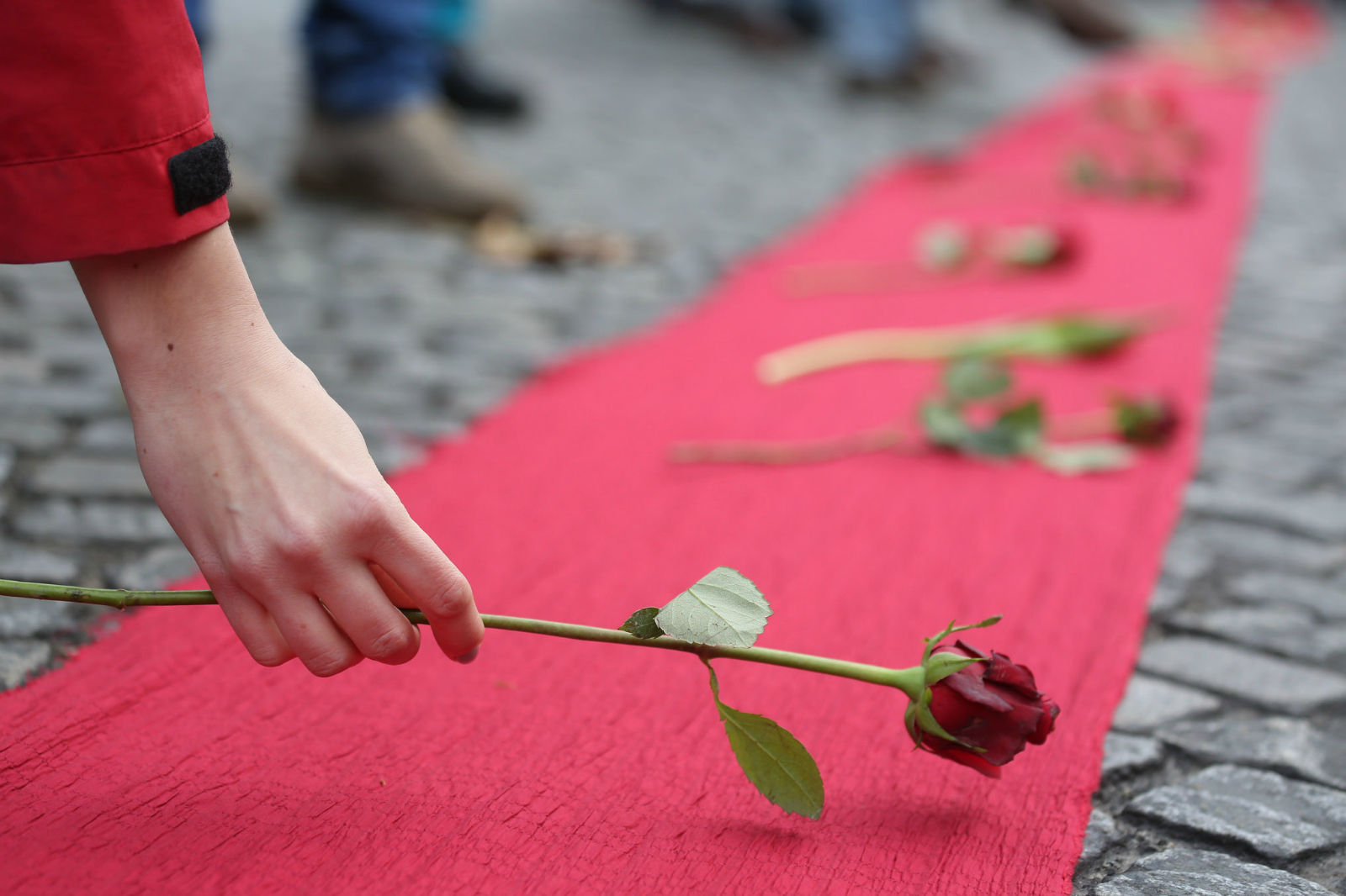 roses being laid on red fabric