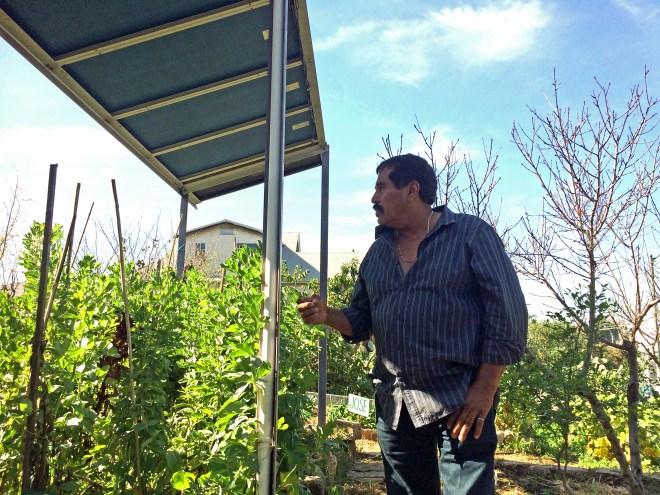 Antonio Garcia overlooks the communal plots at Proyecto Jardín