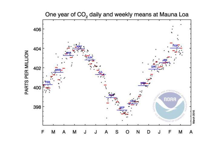 carbon Mauna Loa