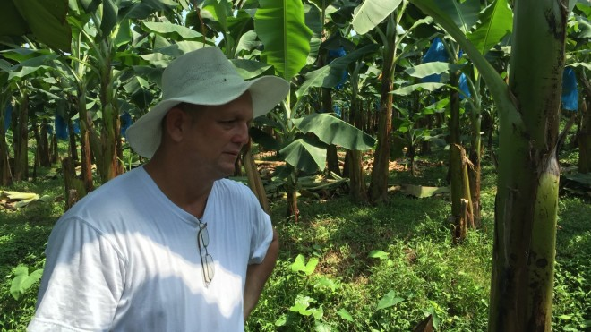 Marcos Brenes in the banana plantation costa rica