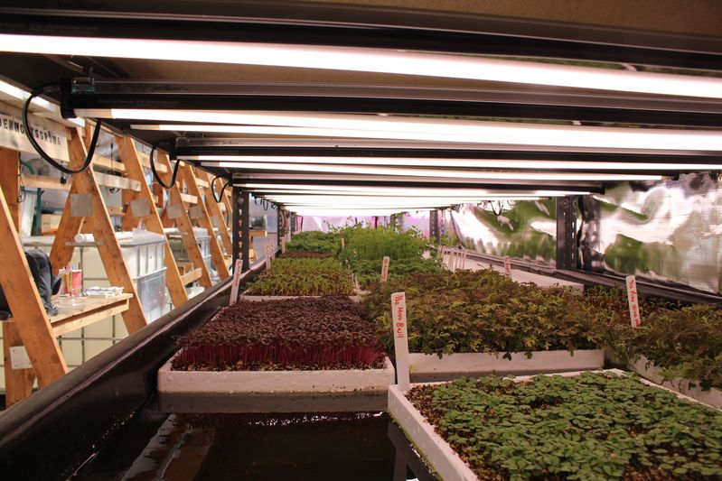 LED lights over several of Edenworks's crops, including micro-basil in the foreground.