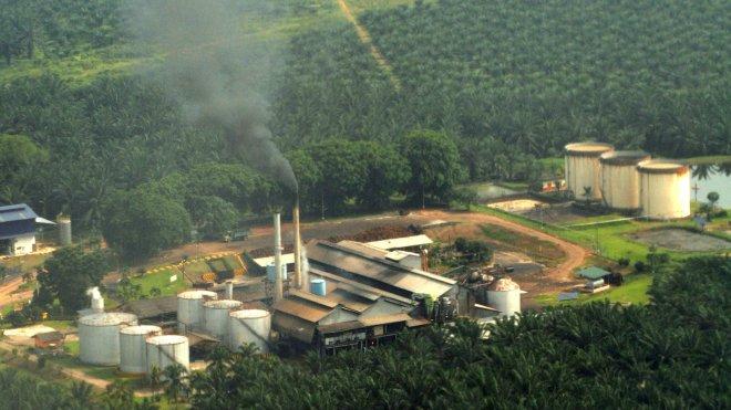 Palm oil plantation at Sepang, Malaysia