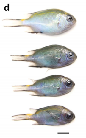Fish from control vs. coal exposed treatments after 28 d.