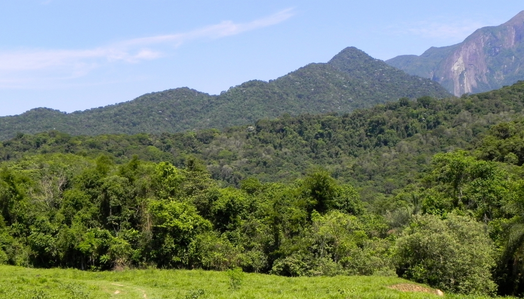 A second-growth rainforest near Rio de Janeiro in Brazil. The forest is about 30 years old.