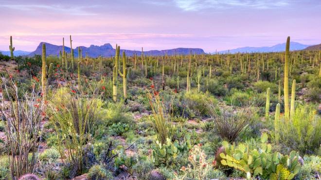 Saguaro National Park, Tuscon