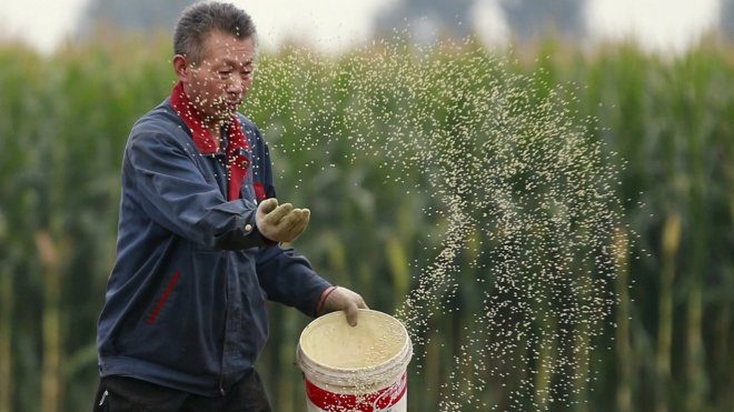 china-broadcast-sowing-corn
