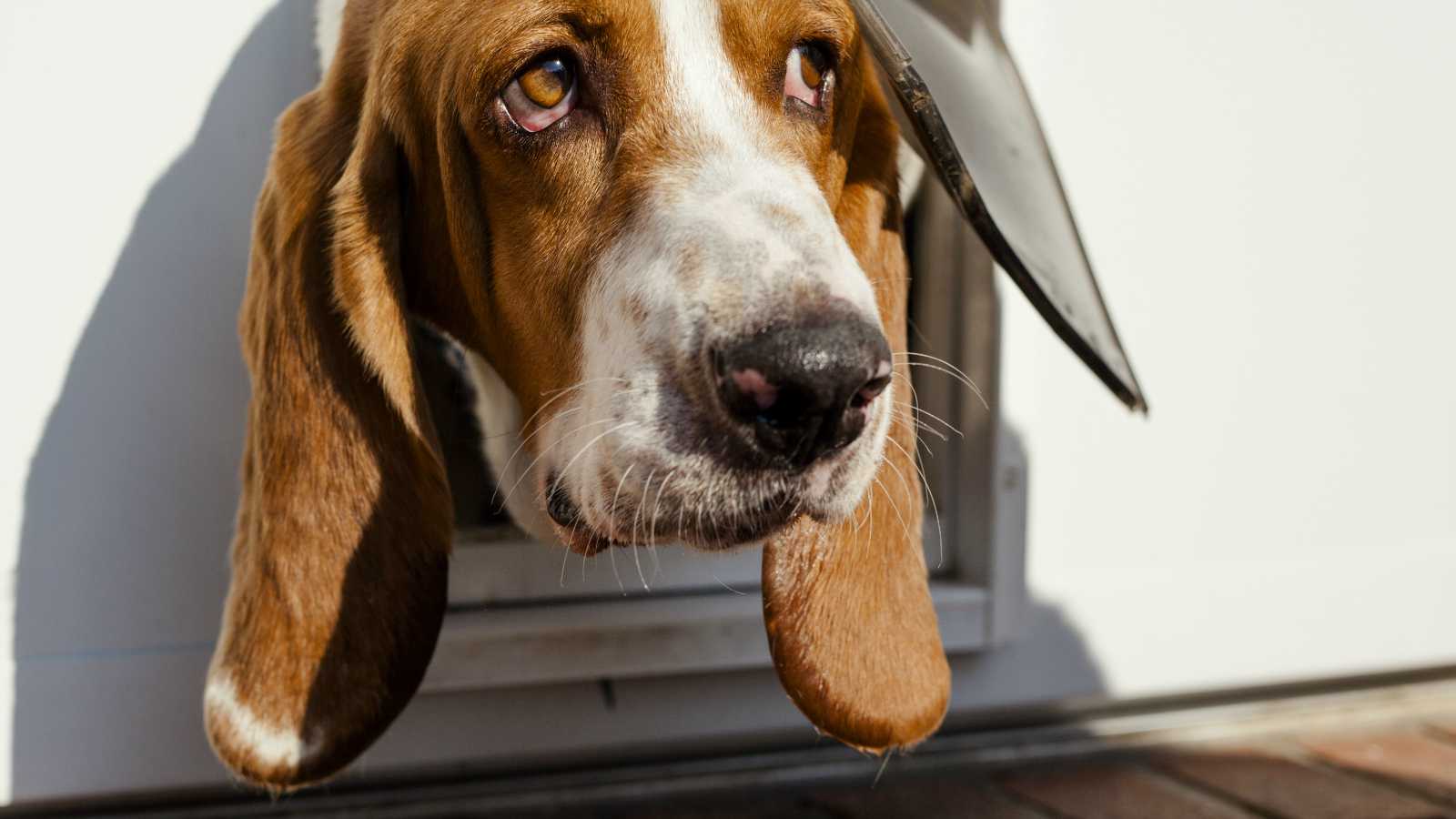Your Doggie Door Is Probably Wasting Energy But You Can Fix That