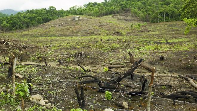 Deforestation in Ecuador.