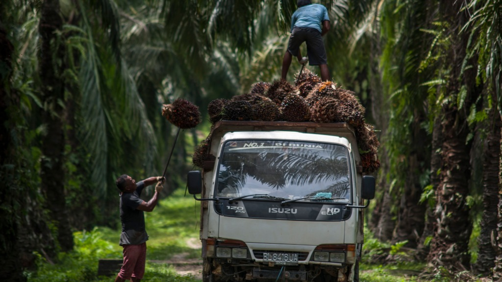 A palm oil plantation in Indonesia.