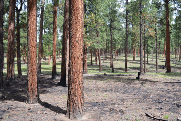 Today, 108,000 acres of burned forest have been restored through strategic thinning and prescribed burns.