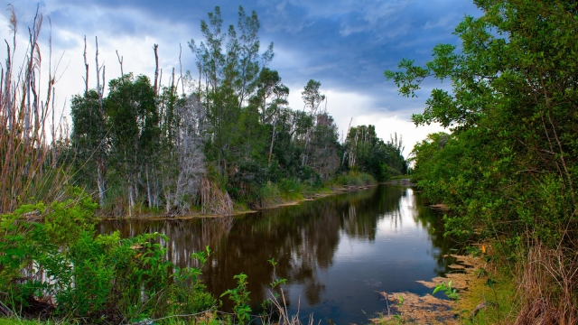 Waterway part of the Everglades.
