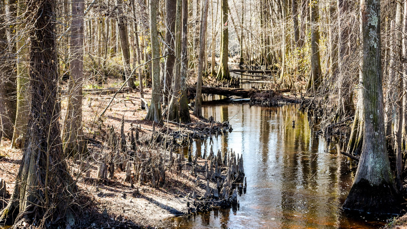 The Lumbee River