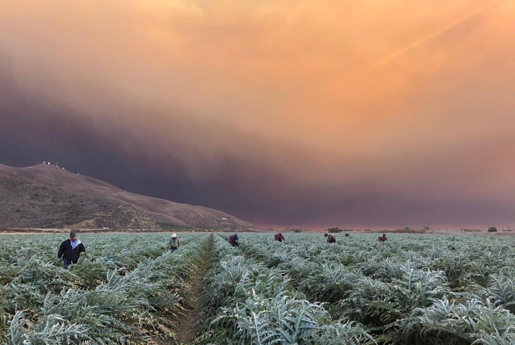 Farmworkers Woolsey Fire