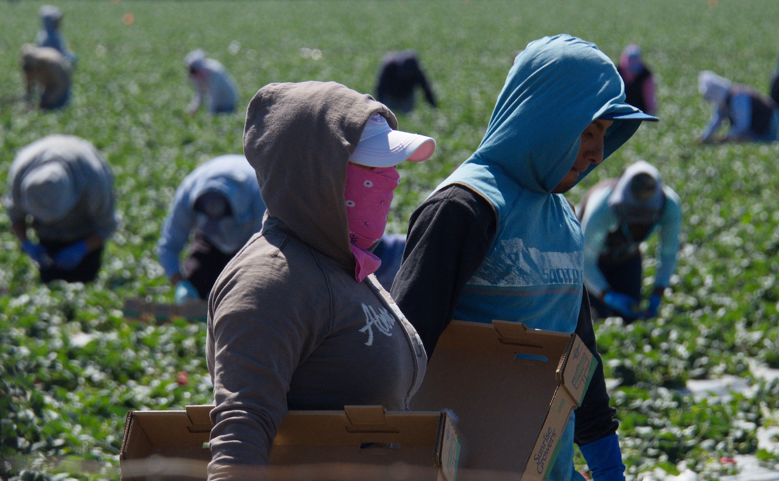 Farmworkers Are Risking Their Lives To Feed A Nation On Lockdown Grist