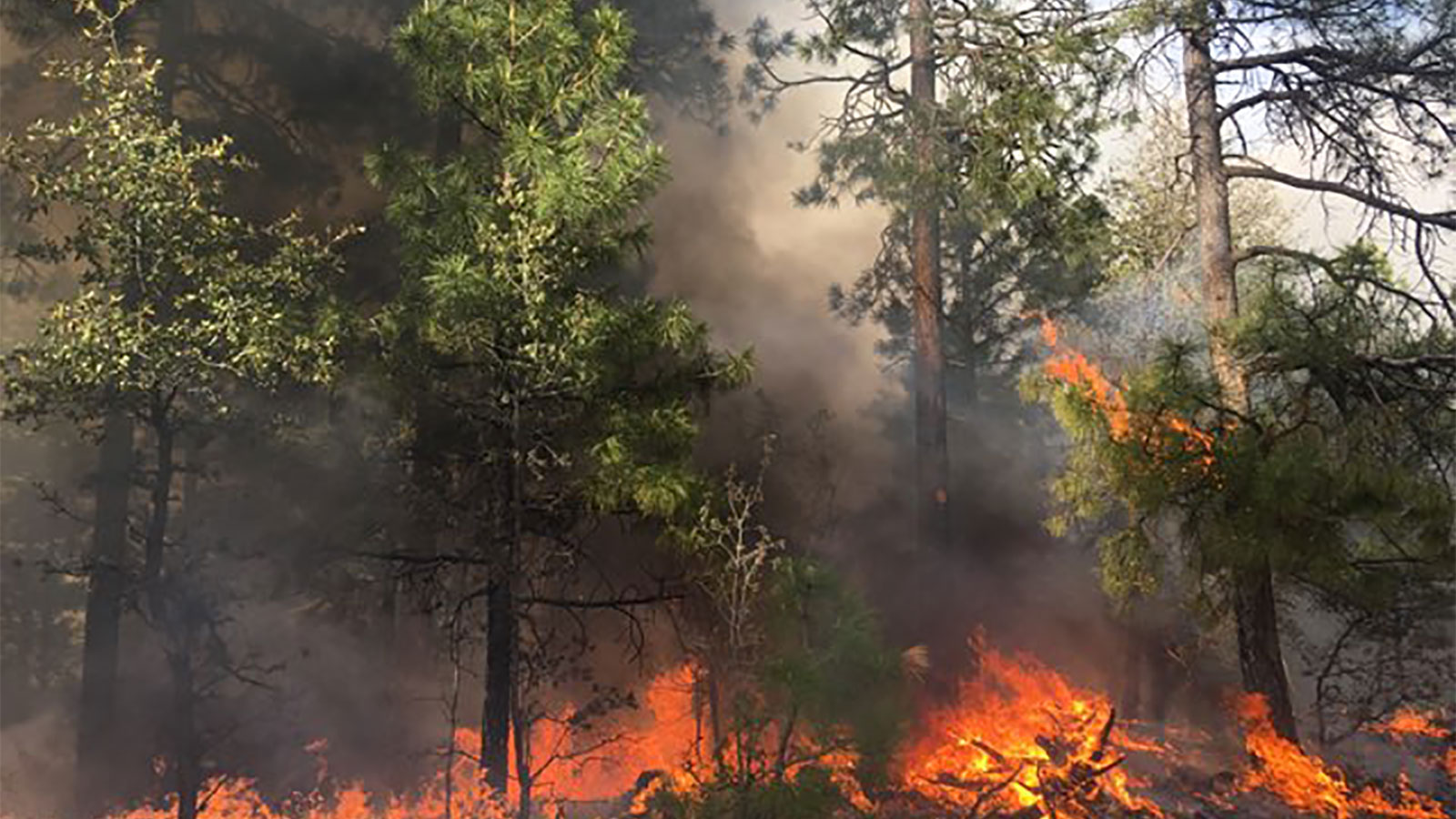 Tonto National Forest fire