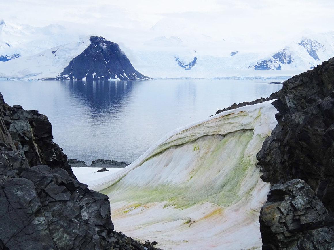 Multicolored snow algae on Anchorage Island.