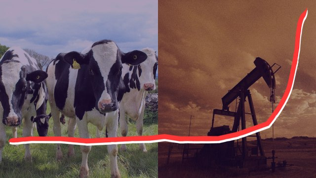 A split screen of cows and an oil jack pump with a line representing the rise of methane emissions