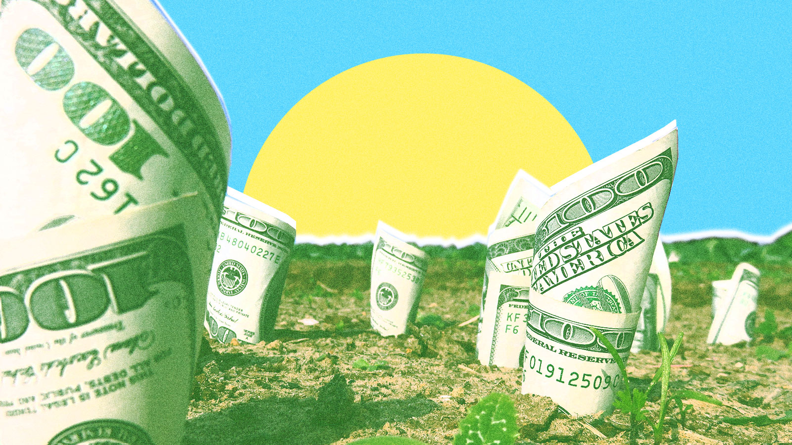 A field with one hundred dollar bills growing out of the ground to represent a green stimulus.