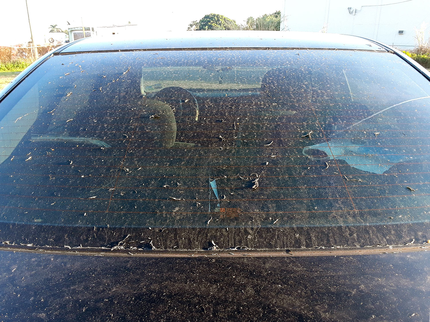 """""""Black snow,"""" as sugarcane ash is called in the Glades, covers the hood and windshield of a car."""