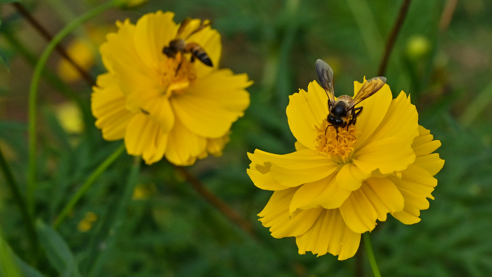 bee sitting on a yellow flower