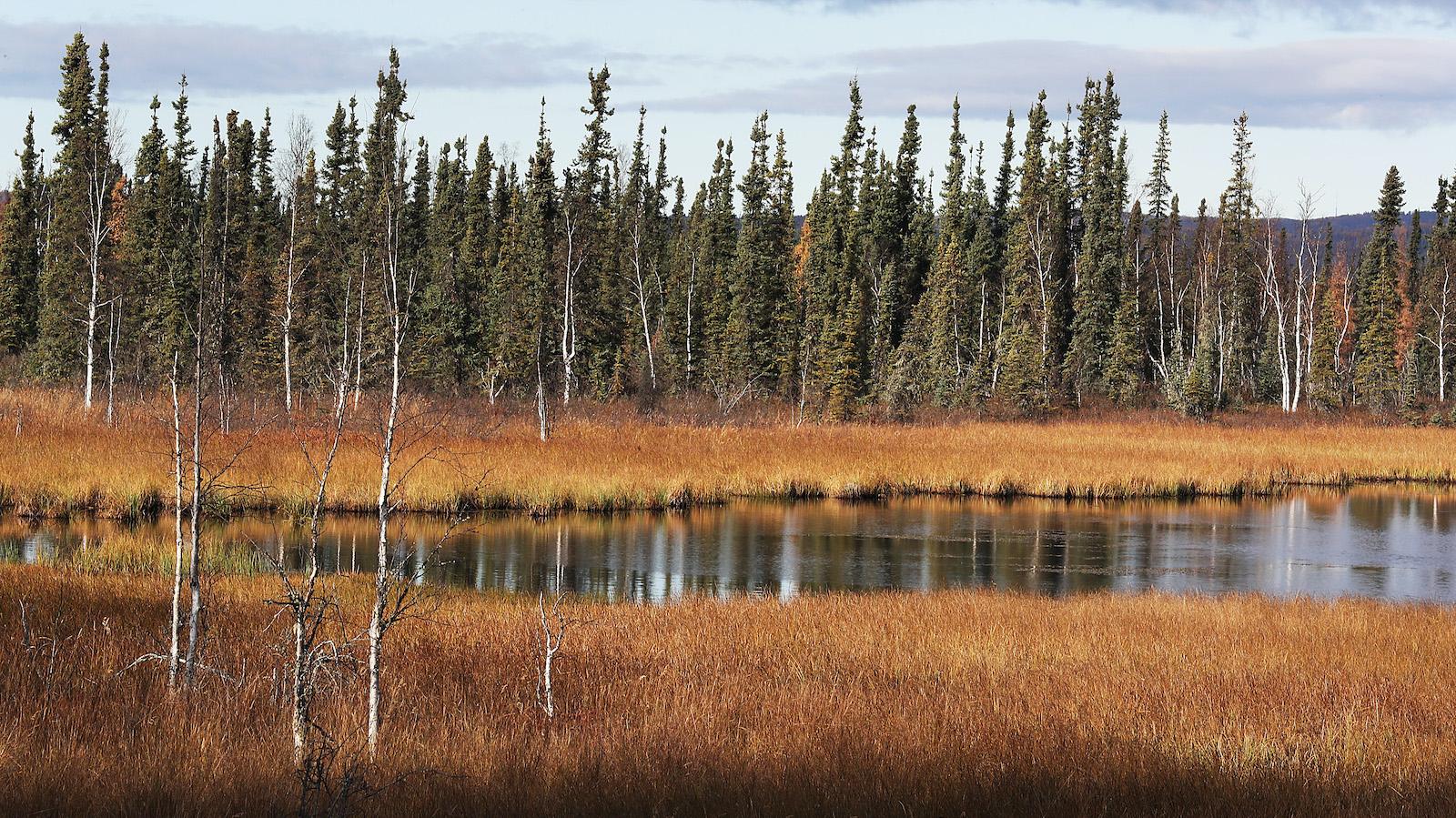 Trans Alaska Pipeline Serves As Main Artery For Alaska's North Slope Oil Fields