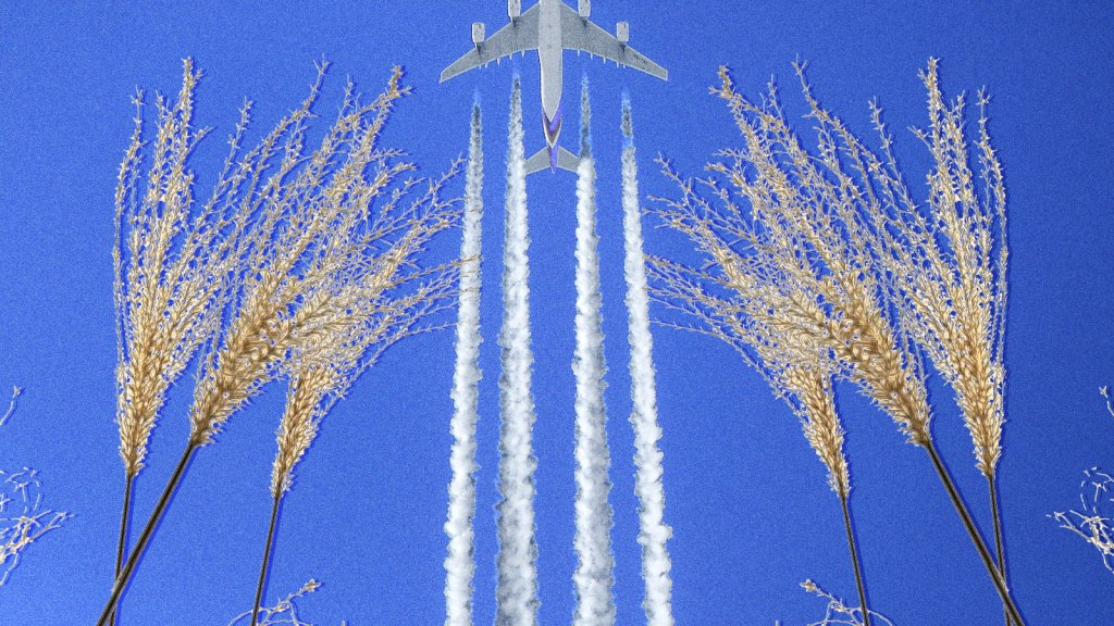 fronds of switchgrass with an airplane taking off above them