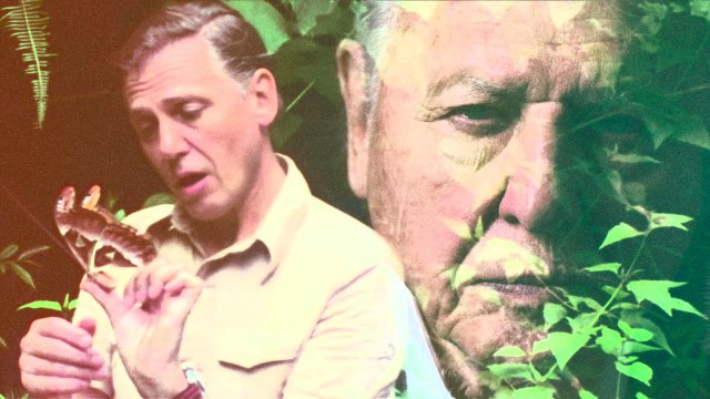 David Attenborough's face superimposed next to an image of his younger self.