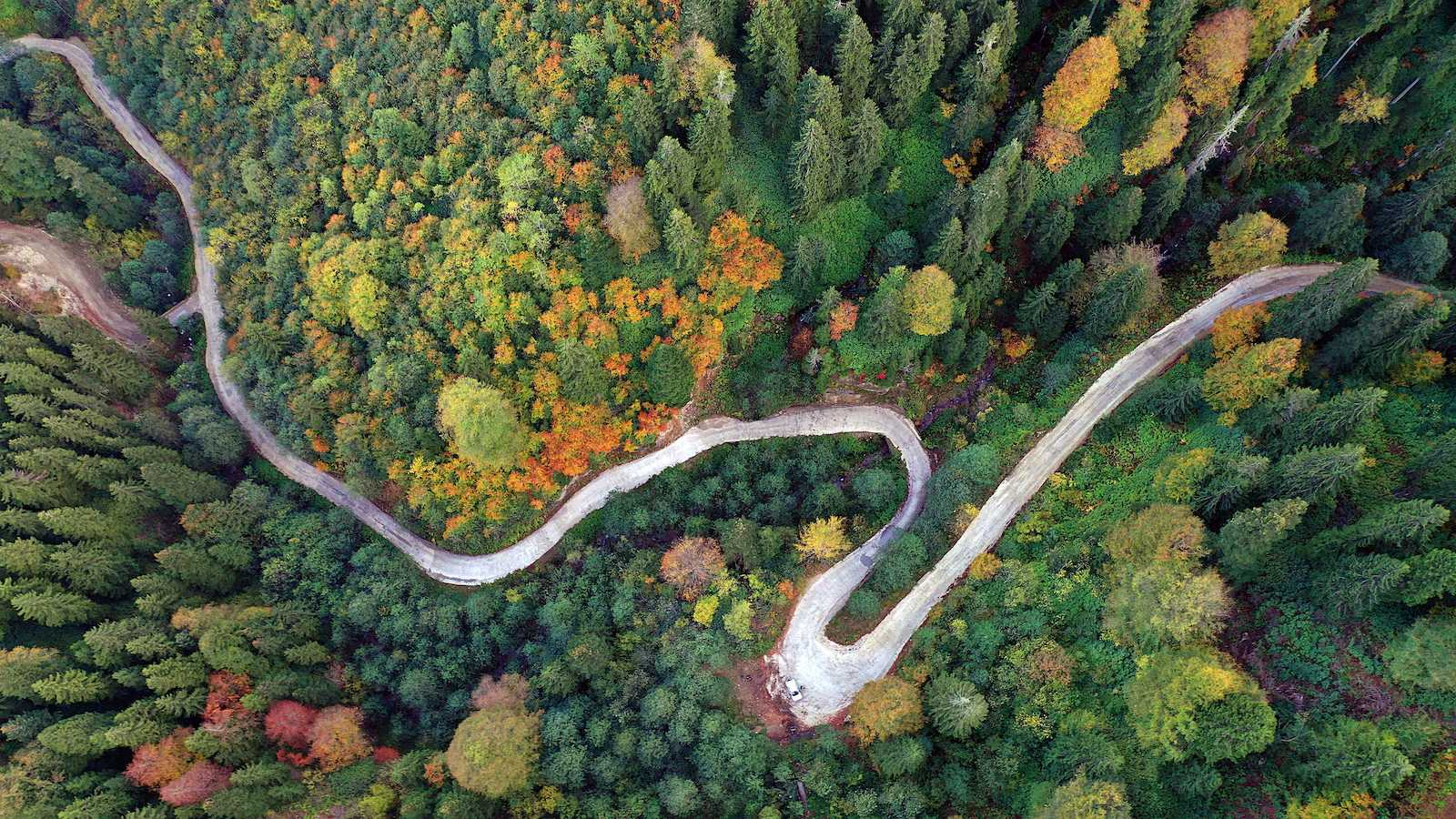 Natural debate: Do forests grow better without our help?