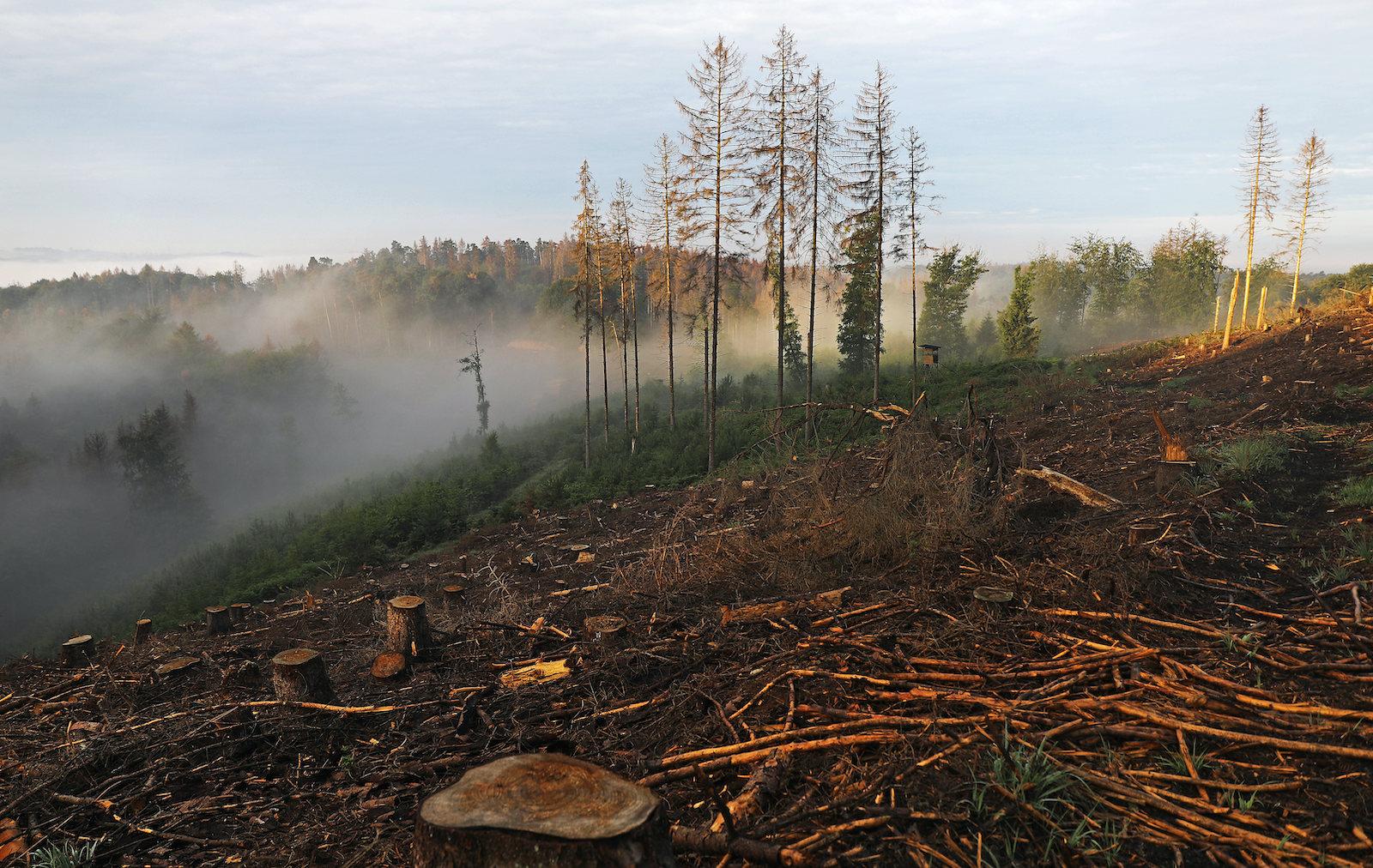Rewild to mitigate the climate crisis, urge leading scientists