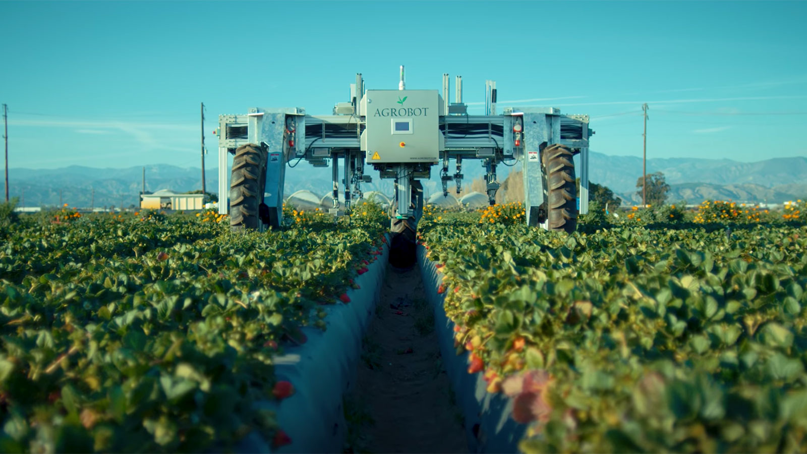 photo of a strawberry picking robot