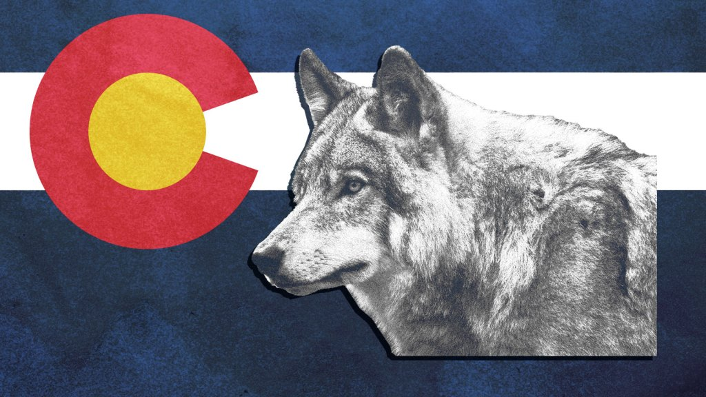 the Colorado flag with a wolf on it