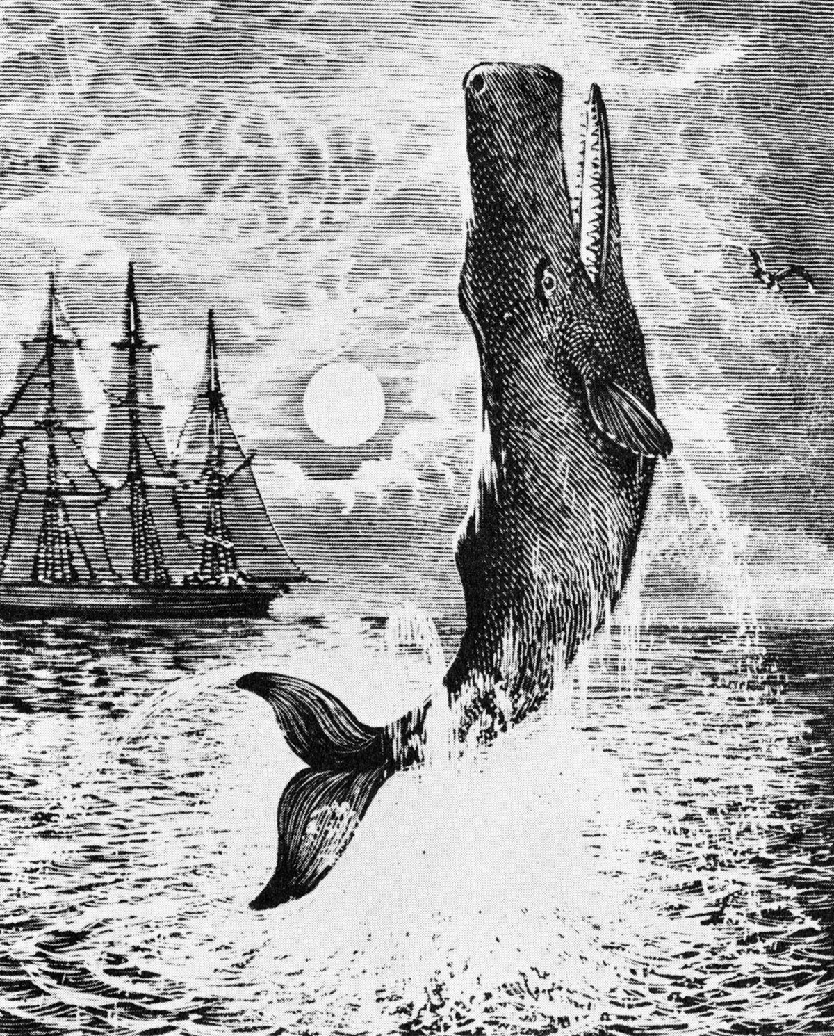 Illustration of Moby Dick from Herman Melville's novel 'Moby-Dick'.