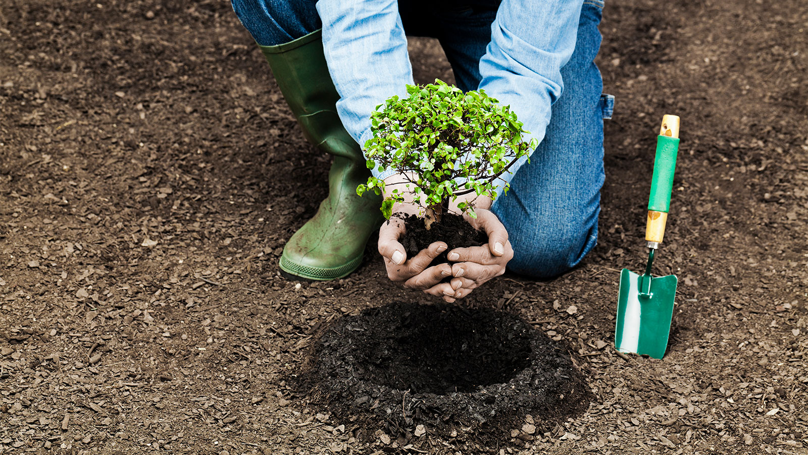 A person planting a tree